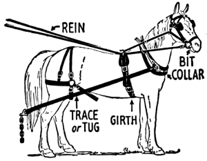horse harness 3
