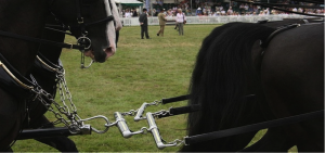 horse harness 2